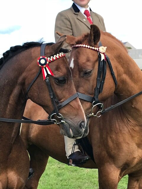 Equine Passports & Microchips Images